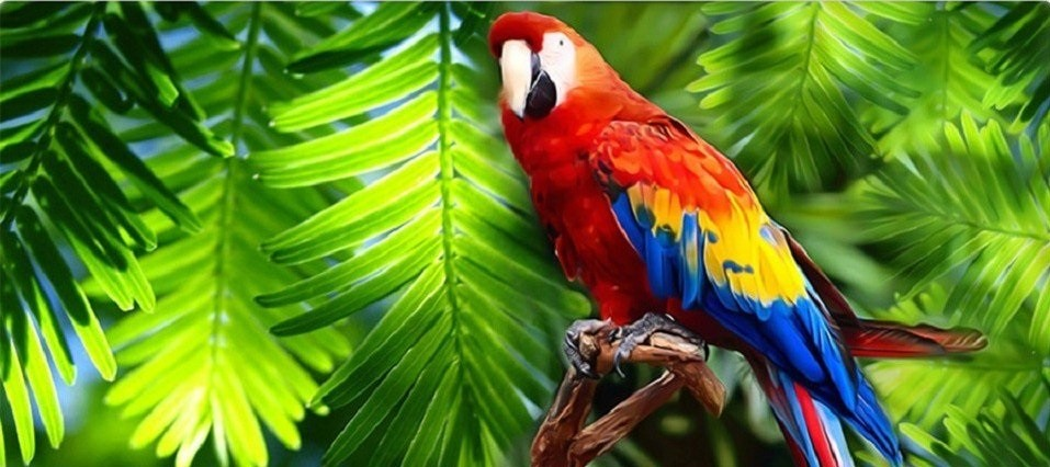 Costa Rica Vacation Packages - Continente Ivantours Travel Group